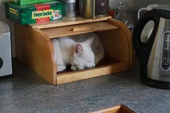 Cat In Bread Box Adorable Cat In A Bread Box